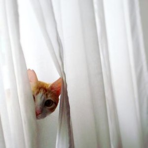 cat in white curtains